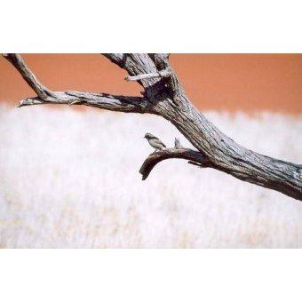 Tableaux photographie - Tableau -Foto 56- - PHOTO12