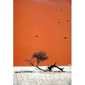 Tableaux photographie - Tableau -Foto 57- - PHOTO12