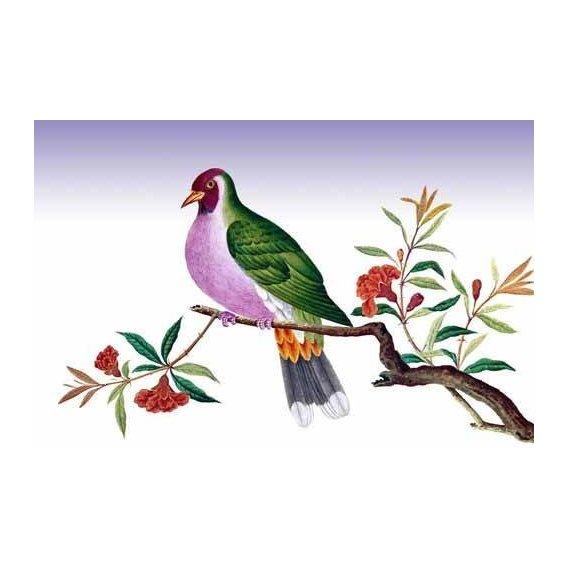 fotos de fauna - Quadro -Pajaro sobre una rama-