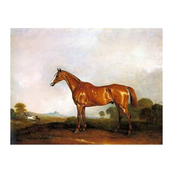 fotos de fauna - Quadro -A Chestnut Hunter in a Landscape-
