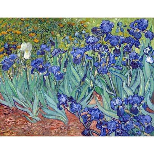 imagens de flores - Quadro -Irises, 1889-