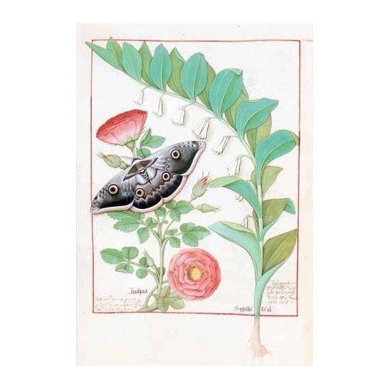 quadros decorativos - Quadro -Libro de las medicinas sencillas 5-
