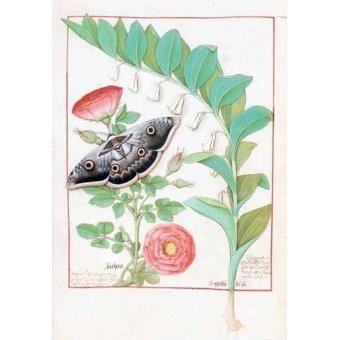 Tableaux de Fleurs - Tableau -Libro de las medicinas sencillas 5- - Platearius, Matthaeus