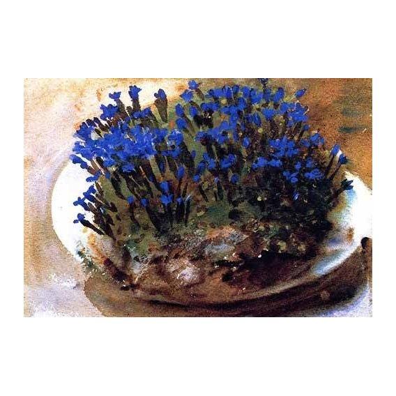 quadros decorativos - Quadro -Gencianas azules-
