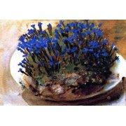 Tableau -Gencianas azules-