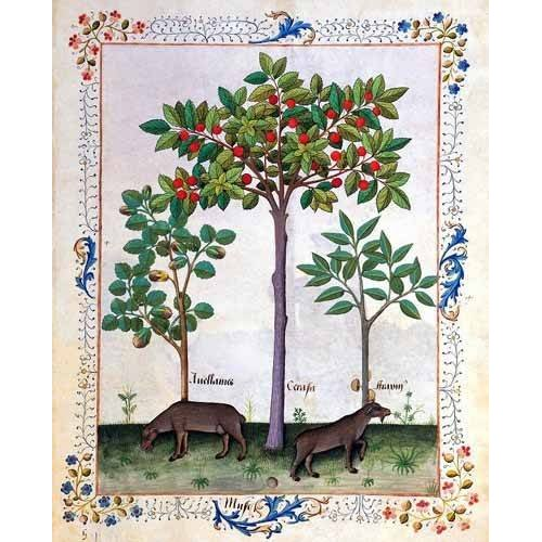 quadros decorativos - Quadro -Libro de las medicinas sencillas 3-