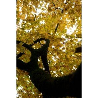 Tableaux photographie - Tableau -MG_0781- - Di Meglio, Paola