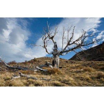 Tableaux photographie - Tableau -pdim_img_0297- - Di Meglio, Paola