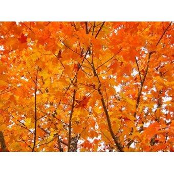 - Tableau -CUGAT-01- - Naturaleza, Fotografia de