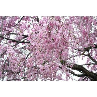 Tableaux photographie - Tableau -CUGAT-14- - Naturaleza, Fotografia de