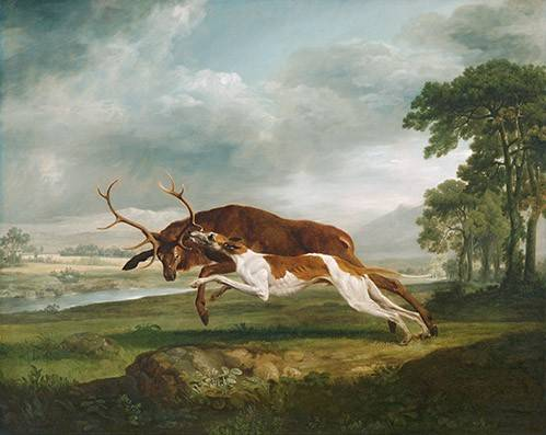 tableaux-de-faune - Tableau -Hound Coursing a Stag- (caza) - Stubbs, George