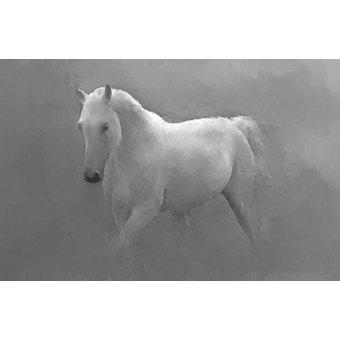 Tableaux de faune - Tableau -Caballo blanco- - _Anónimo Español