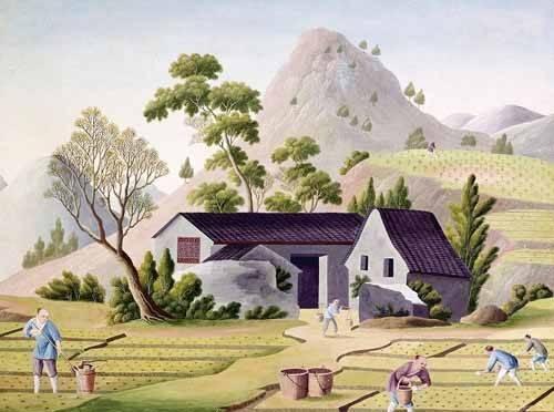 tableaux-orientales - Tableau -Campesinos en los arrozales- - _Anónimo Chino