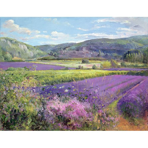 Tableau - Lavender Fields in Old Provence -