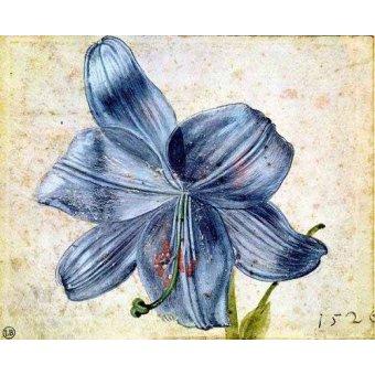 Tableaux de Fleurs - Tableau -Estudio de una lila - - Dürer, Albrecht (Albert Durer)