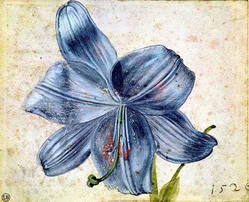 tableaux-de-fleurs - Tableau -Estudio de una lila - - Dürer, Albrecht (Albert Durer)