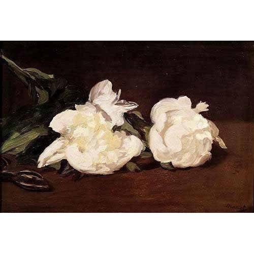 imagens de flores - Quadro -Rama de peonías blancas y podadera-