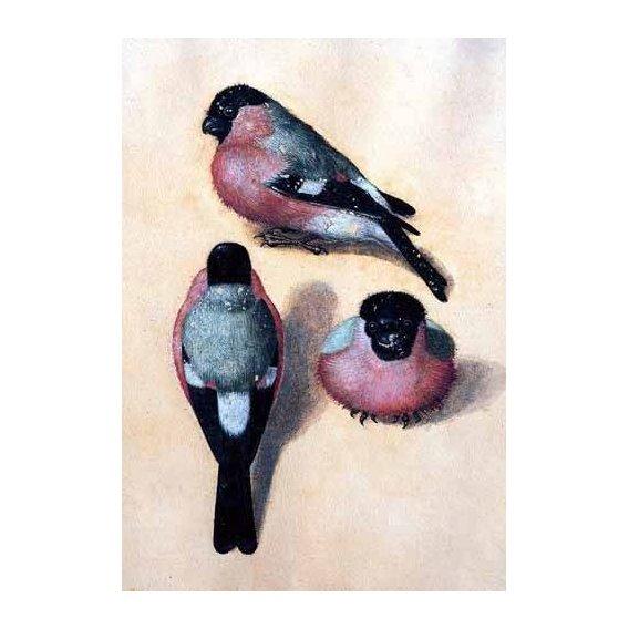 fotos de fauna - Quadro -Un pájaro en tres posiciones-