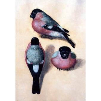 Tableaux de faune - Tableau -Un pájaro en tres posiciones- - Dürer, Albrecht (Albert Durer)
