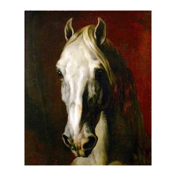 fotos de fauna - Quadro -Cabeza de caballo blanco-