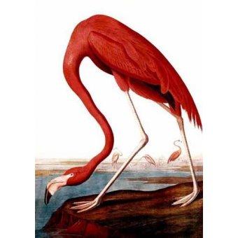 Tableaux de faune - Tableau -Flamenco Americano- - Audubon, John James